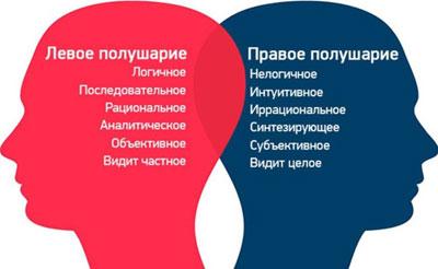 оба полушария мозга<br />