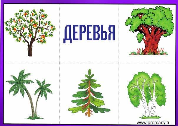 назови одним словом деревья