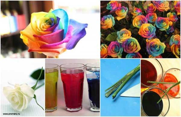 опыт для детей радужная роза