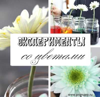 опыты со цветами