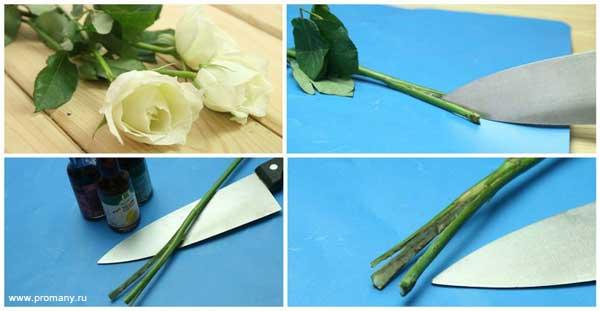разделить стебель для окрашивания цветка